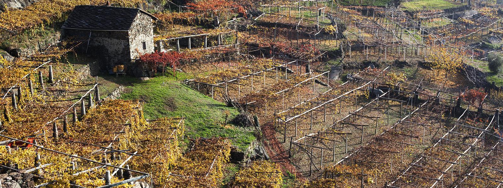 Azienda Agricola Giovanetto